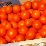 尾道・岩子島産100%☆完熟トマトソースのレシピ
