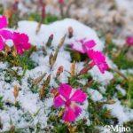 尾道駅近『ONOMICHI U2 The RESTAURANT』de雪の朝のモーニング♪
