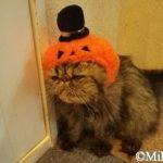 松山市大街道『猫カフェron-ron』deニャンズに癒されまくる