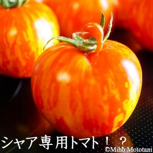 zakutomato_1280