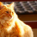 竹国照顕氏カメラ教室<尾道を撮りたい!002>Vol.5 艮神社~猫の細道~天寧寺~公園deネコまみれ♪