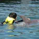 しまなみ海道 愛媛県・伯方島『ドルフィンファームしまなみ』イルカと泳げる施設オープン!