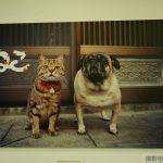 尾道市立美術館「岩合光昭写真展~ねこ~」de世界中のねこの可愛さに出会う♪