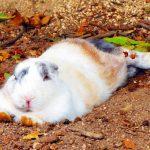 しまなみ海道『ちゃりん娘ファンライド』!キュートなアイドル、可愛いウサギ、鮮やかな日本料理!