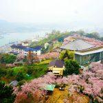 尾道の桜2017 桜の名所100選「千光寺公園」と「猫まみれ展」、約1.7kmの桜並木「桜土手」