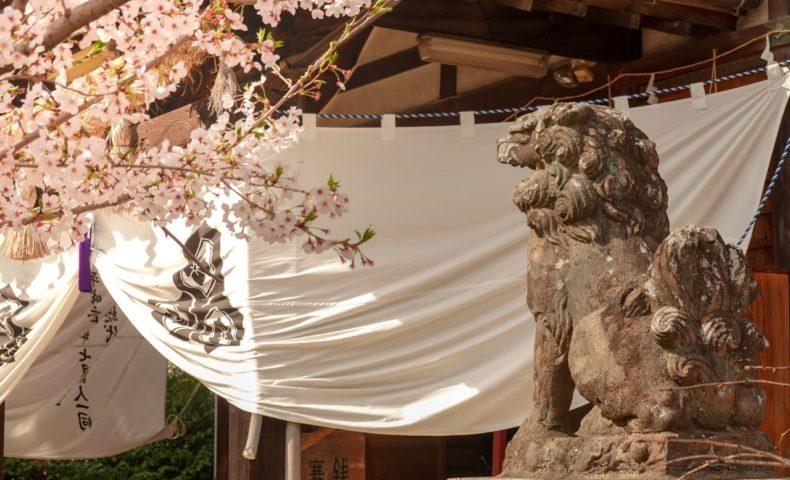『尾道・向島 嚴島神社』狛犬が乗った立派な手水に驚き、桜を愛でた一日。