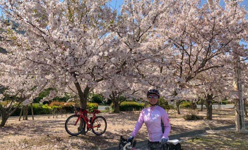 しまなみ海道サイクリング向島~生口島 約60km 『瀬戸田サンセットビーチ桜まつり』