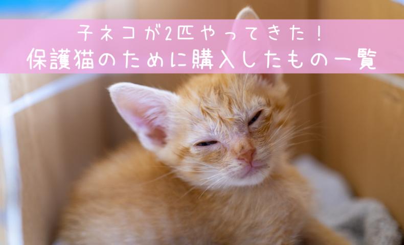 子ネコが2匹やってきた!フード、トイレ他、保護猫のために購入したもの一覧。