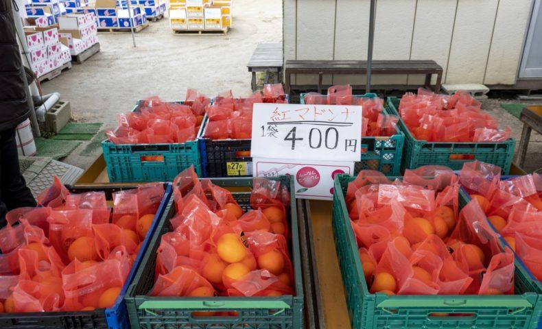 まるで濃厚オレンジゼリーな柑橘「紅まどんな」をお手頃価格で@尾道市向島